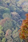 KAENG KRACHAN NP THAILAND - FOREST SCENES (28).JPG