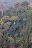 KAENG KRACHAN NP THAILAND - FOREST SCENES (29).JPG
