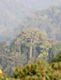 KAENG KRACHAN NP THAILAND - FOREST SCENES (31).JPG