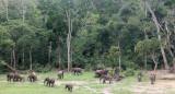 ELEPHANT - FOREST ELEPHANT - DZANGHA BAI - DZANGHA NDOKI NP - CENTRAL AFRICAN REPUBLIC (151).JPG