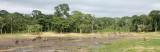 ELEPHANT - FOREST ELEPHANT - DZANGHA BAI - DZANGHA NDOKI NP - CENTRAL AFRICAN REPUBLIC (186).JPG