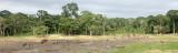 ELEPHANT - FOREST ELEPHANT - DZANGHA BAI - DZANGHA NDOKI NP - CENTRAL AFRICAN REPUBLIC (187).JPG
