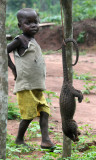 PHOLIDOTA - LONG-TAILED PANGOLIN - CENTRAL AFRICAN REPUBLIC (1).JPG
