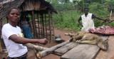 VIVERRIDAE - AFRICAN PALM CIVET - BUSH MEAT - CENTRAL AFRICAN REPUBLIC (21).JPG