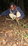 DZANGA NDOKI NP CENTRAL AFRICAN REPUBLIC - DAY WITH THE BA'AKA PYGMY (28).JPG