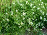 April 2011 yard photos