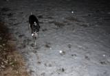 snow zoe 9pm.jpg
