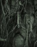 flora__trees_in_a_concrete_jungle