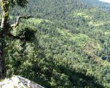 Terraced hillside Pindari.jpg