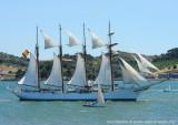 Tall Ships - 3098