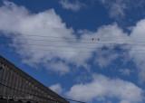 Do 2 Swallows make a summer?