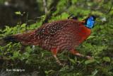 sichuan_birds_2012