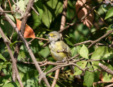 birds_maryland_usa