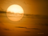 Rising Sun With Snow Geese - Cap Tourmente