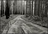 wildhorse_road_9154.jpg