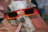 ASPCA approved chihuahua retina protection