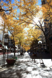 Avenue of Denver
