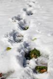 Winter Footprint