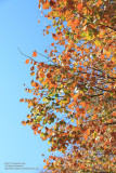 Sense of Autumn