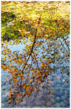 The Reflection of Autumn
