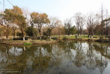 A Garden Pond