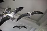 Birds 9300