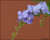 4992 Purple flower.jpg
