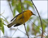 Ohio Birding