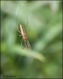 5693 Spider id.jpg