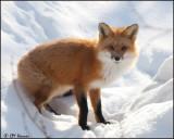 Algonquin Provincial Park, February 11, 2012