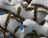 6594 Snow .jpg