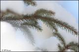 6597 Snow.jpg