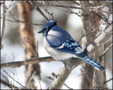 6730 Blue Jay.jpg