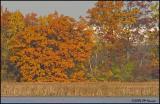 9757 Corner Marsh.jpg