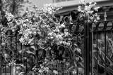 PrimaveraCron90.jpg