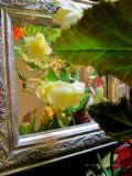 Dragon Wing Begonia Blooms & Leaves
