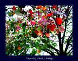 Very Berry Fall.JPG