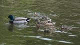 The little family / Den lille familie