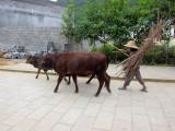 Guilin, Lijiang and Shanghai