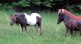 Paling around and grazing too