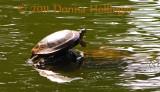 1400.turtle.mt.auburn.0002.jpg