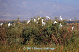 Egrets' Roost