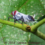 reyed.mothtype.4600.jpg