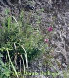 Ecuador Highland Flora