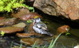 Spring Stream Birds