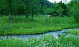 Habitats And Landscapes