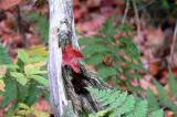 Fall in the Muskoka's......