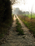 The  road  to  Ifield  Court.