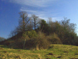 The  overgrown  motte, Mount  Bures.