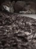 furry sleepers